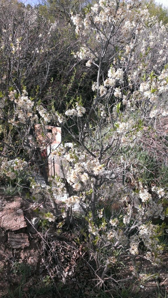 compuerta plum blossoms