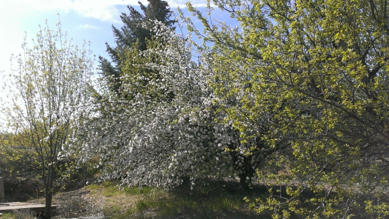 irrigation ditch blooming tree3